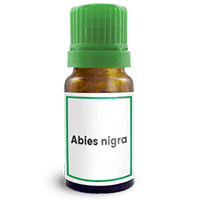 Abbildung des homöopathischen Einzelmittels Abies nigra
