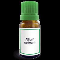 Abbildung des homöopathischen Einzelmittels Allium sativum