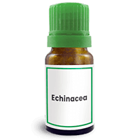 Abbildung des homöopathischen Einzelmittels Echinacea