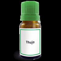 Abbildung des homöopathischen Einzelmittels Thuja