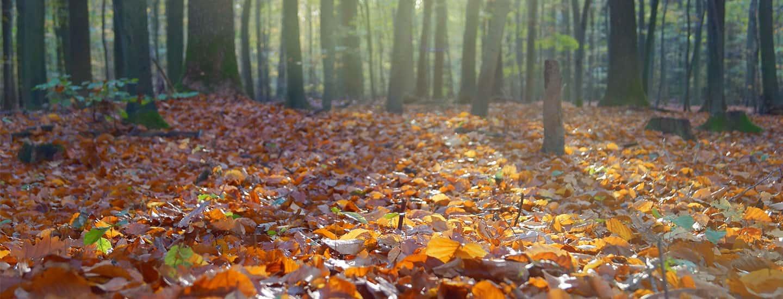 Fit durch den Herbst.